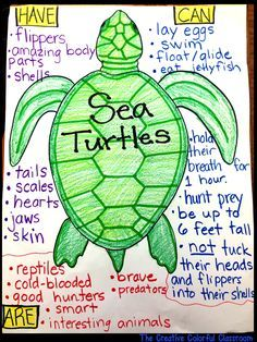 Sea Turtle Anchor Chart! Anchor charts with visuals for under the sea theme