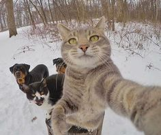 Guys...ready?- cats and dogs.... taking selfies together.. mayhem