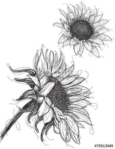 Cartoon Of A Retro Vintage Black And White Sunflower Leaves