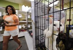A ruling from the Maryland State Court of Appeals has given the residents of Baltimore County the right to sue the county for wasting taxpayer dollars in the alleged mismanagement of the animal shelter. State Court, Animal Shelters, Veterinary Care, Baltimore, Maryland, Dog Cat, The Past, Animals, Animales