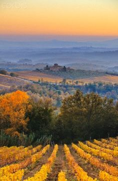 autumn vineyard, Chianti region, Tuscany, Italy | Corbis