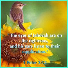 532 Best Jehovah is my God and my strength images in 2014