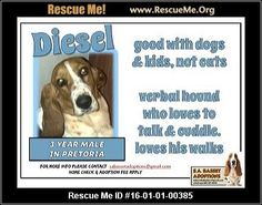 ― South Africa Dog Rescue ― ADOPTIONS ―RescueMe.Org Post Animal, Dogs And Kids, Rescue Dogs, Love Him, South Africa, Adoption, Cats, Shop, Foster Care Adoption