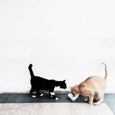 Kitty cats | Jing Lin | VSCO Grid