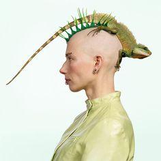 A lizard Mohawk!