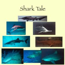 Shark Tale by Ms. Zemrock's Class and Others