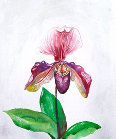 watercolor paintings of orchids | Watercolor Painting, Original Painting, Orchid Painting, Botanical, 9 ...