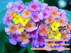 Reduce Creatinine 6.8 Naturally With The Systematic Treatments