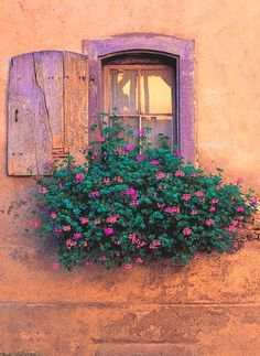 If you want to make the most out of your window box, you need to design it properly. Need ideas to style your window box? Check out our 17 list window box ideas Old Windows, Windows And Doors, Garden Windows, Old Doors, Flower Boxes, Flower Tree, Window Box Flowers, Balcony Flowers, Window Boxes