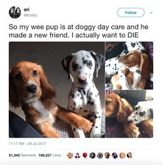 a146583e8c 798 Best CUTENESS OVERLOAD!!! images in 2019
