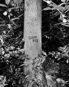 I hope the trees don't know something we don't . . . . . #bnw_demand #bnwmood #monochrome #bnw_globe #blackandwhitephoto #rsa_bnw #blackandwhitephotography #blacknwhite_perfection #bnw_captures #nature_brilliance #EarthVisuals #artofvisuals #welivetoexplore #natureaddict #naturediversity #ourplanetdaily #earth_deluxe #instanaturelover #nature_prefection #allnatureshots #irland #inspireland_ #loveireland #loves_ireland #ig_ireland #androidography #androidinstagram #instaandroid #irishexplorer… Love Ireland, Black And White Photography, Monochrome, Globe, Trees, Earth, Nature, Prints, Pictures