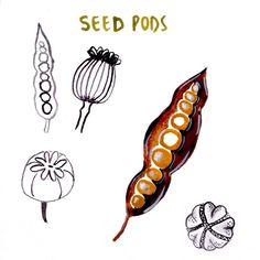 Seed pods.  #cbdrawaday #creativebug #30daysofpainting #junechallenge #makeart #artoftheday #painteveryday @augustwren @creativebug
