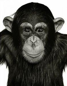 Monkey Shine