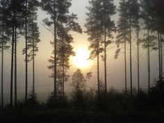 maisema, aamu-aurinko