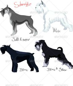 Buy Vector set Schnauzer of different colors by Kavalenkava on GraphicRiver. Schnauzer colors: white, black, salt and pepper, black silver, isolated on white background. More Schnauzers for you: Schnauzer Grooming, Miniature Schnauzer Puppies, Giant Schnauzer, Schnauzer Puppy, Dog Grooming, Pet Puppy, Silly Dogs, Cute Dogs, Tattoo Perro