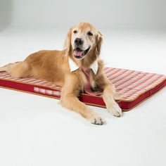 Life@pp Cat Dog Bed- Joint Relief Cushion Sleeping Pet Mat-2 Pack * Want to know more, click on the image. (This is an affiliate link and I receive a commission for the sales)