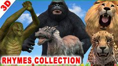 Animal Finger Family Collection: Gorilla Shark Lion Tiger Crocodile & Mo...