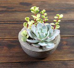 Succulent Planter In Handmade Concrete Dish by SourceSucculents