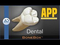 Morfologia piezas dentarias superiores definitivas - YouTube