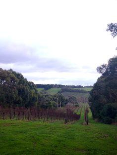[Trip diary] Vineyard, Red Hill, Melbourne, Australia.