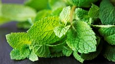 Symptoms Of Nausea, Stress Symptoms, Treatment For Nausea, Remedies For Nausea, Mint Oil, Mosquito Repelling Plants, Stress And Depression, Food Combining, Boost Metabolism