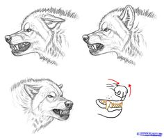 Three stages of an angry wolf. Wolf Face Drawing, Teeth Drawing, Animal Sketches, Animal Drawings, Drawing Sketches, Cool Wolf Drawings, Dog Drawings, Drawing Guide, Snarling Wolf