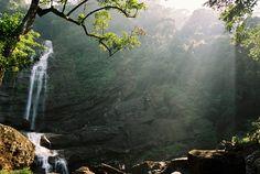 Rain forest Sinharaja, Sri Lanka