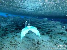 Mermaid Poems, Mermaid Gifs, Fin Fun Mermaid, Mermaid Drawings, Mermaid Art, Types Of Mermaids, Real Mermaids, Mermaids And Mermen, Mermaid Videos Real Life