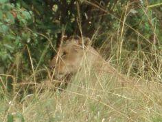 Kenya, Africa.  Via Photo-Shott.