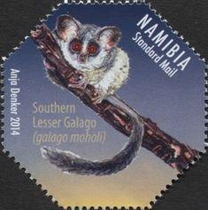 Southern Lesser Galago (Galago moholi)
