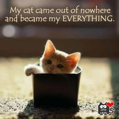 Tiny Cat in a Box Wallpaper Cute Kittens, Cats And Kittens, Box Wallpaper, Wallpaper Wallpapers, Crazy Cat Lady, Crazy Cats, Pull Chat, Croquettes Chat, Chat Origami