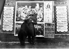 Rok 1931. Występy włoskiego cyrku Adriano. 3 D, Fictional Characters, Fantasy Characters