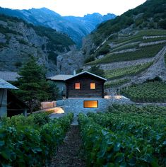 Refreshing Vineyard Home in Switzerland by Savioz Fabrizzi Architectes
