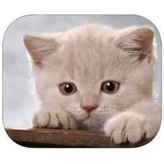 Animal Mouse Pad / Cats $5.00