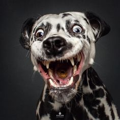 This Hilarious Photographer Takes Photos Of Dogs Catching Treats And We Can't Get Enough - DOGBEAST