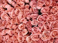 Download Background, flowers, pink, rose, roses image on Favim.com ...