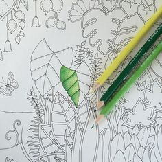 Sharpen Your Greens And Tropical Brights I Make Books So You Can Masterpieces Find This Pin More On Magical Jungle