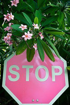 stop :: Bermuda Canuck