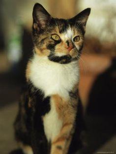 Beautiful cat! <3