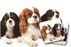 LittleGifts King Charles Spaniel Mouse Pad >>> Check out the image by visiting the link.
