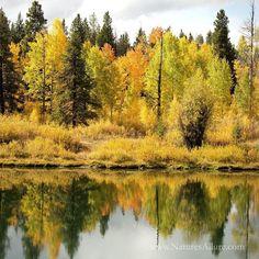 Tetons Fall Color