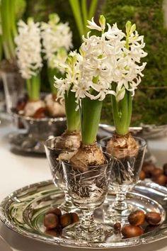 White hyacinths and silver - beautiful winter centerpiece. Must use my Grandma's hyacinth glasses!