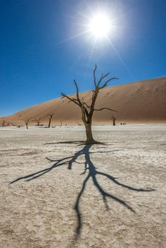 natural abstract image of a dead tree in the dead vlei of Namibia Abstract Images, Fine Art Paper, Wilderness, Fine Art Prints, Wildlife, Canvas Art, African, Natural, Heart