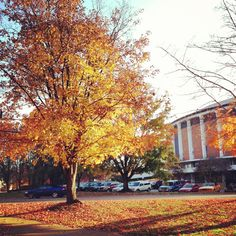 Beautiful Fall shot outside the Convocation Center on West Green. #OhioUniversity