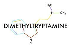 DMT, the 'spirit molecule'. No one knows why or what the function of DMT is but an abundance of species including humans contain this molecule