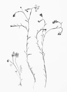 wildflowers drawing - Google Search