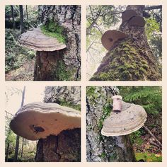 A cache in a fungus