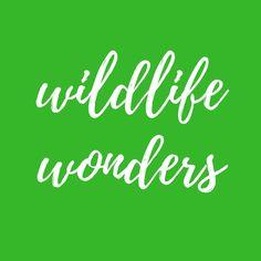 Chalk Art, Yoga Pants, Wildlife, Logos, Women, Logo