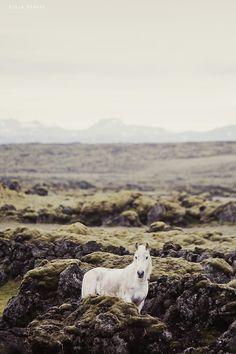 mitlas:Alone (by Gígja Einars..)