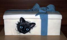 Dort kočka v krabici, Cake cat in the box.
